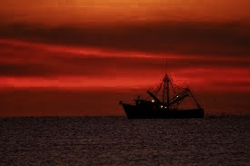 shrimp boats 2 (275x183)